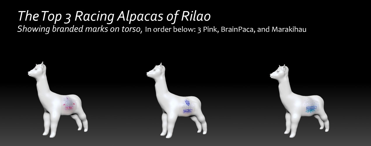 Racing_Alpacas_of_Rilao1